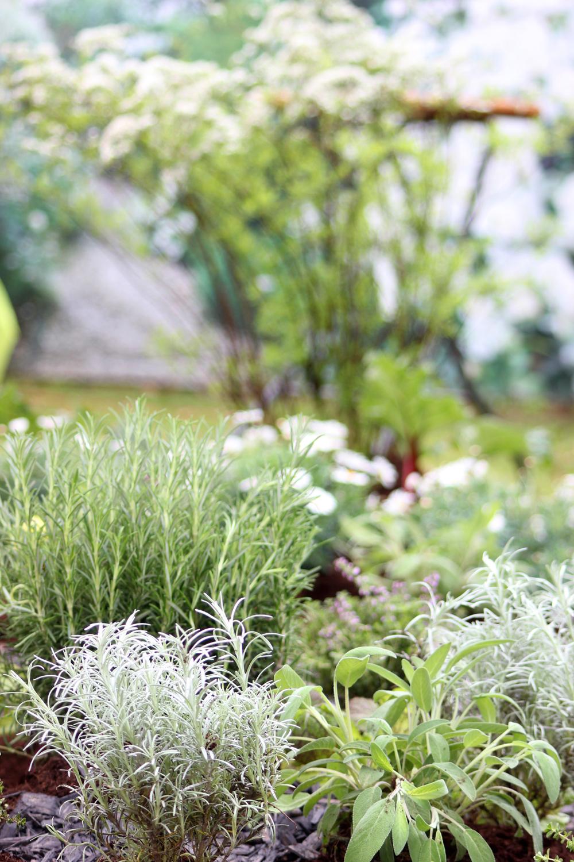 Gartengestaltung Kräutergarten Pflanzen Kölle