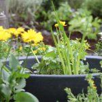 Gartengestaltung Wassergarten
