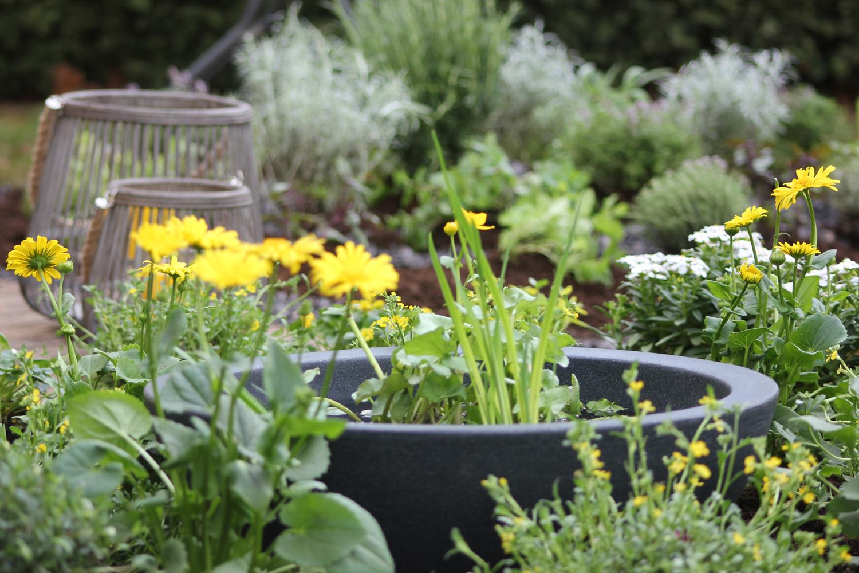 Gartengestaltung Wassergarten Pflanzen Kölle