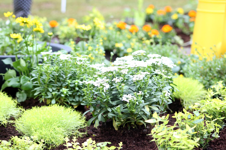 Gartengestaltung Zengarten Pflanzen Kölle