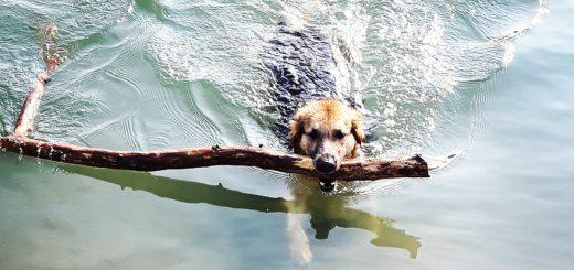 Schwimmen mit dem Hund