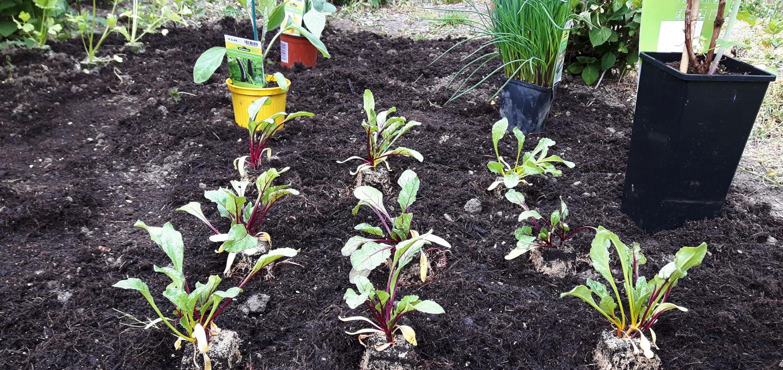 Beeren und Gemüsepflanzen