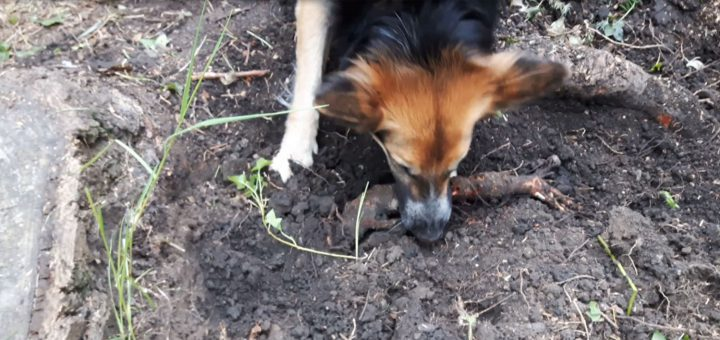 Unverzichtbarer Gartenhelfer