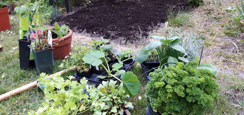 Vom Ziergarten zum Nutzgarten - Pflanzenauswahl