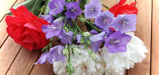 Sommerblumen aus dem Garten