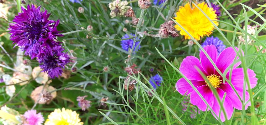 Sommerblumen im Garten