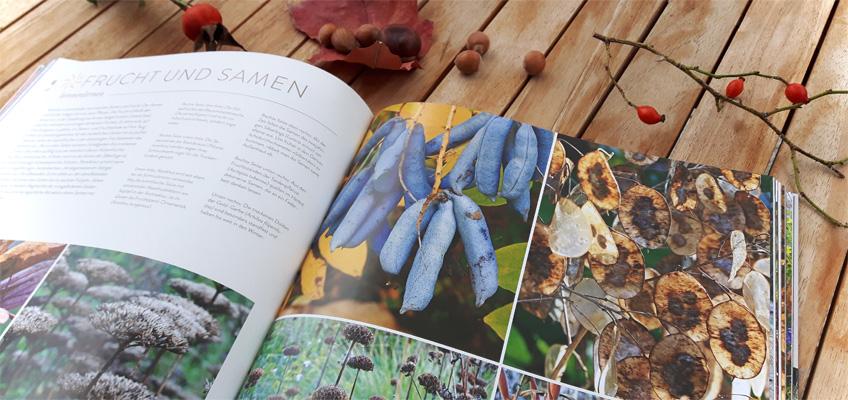 Herbstzauber Traumhafte Gartenideen für die zweite Jahreshälfte - Frucht und Samen