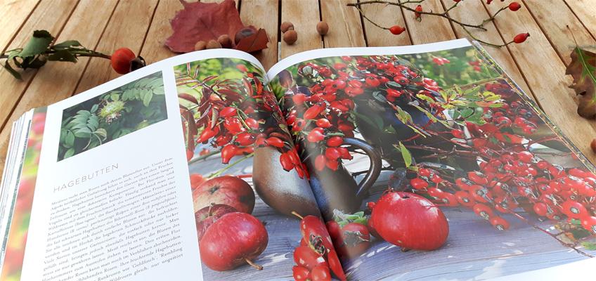 Herbstzauber Traumhafte Gartenideen für die zweite Jahreshälfte - Hagebutten