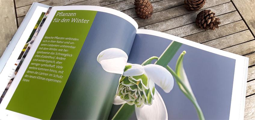 pflanzen fuer den winter gr neliebe