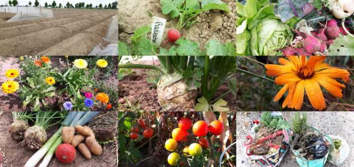 Rückblick auf das Gartenjahr