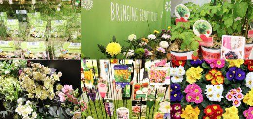Messerückblick der Internationalen Pflanzenmesse Essen 2017 IPM