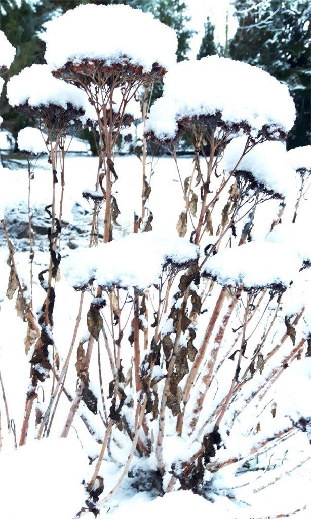 Schnee im Garten Winter