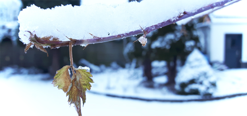 Schnee im Garten Winterlandschaft