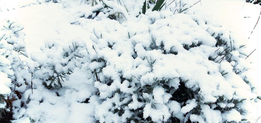 Winterlandschaft Schnee im Garten