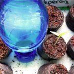 automatische Bewässerung von Anzuchten