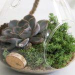 Sukkulenten als Zimmerpflanze Sukkulenten im Glas