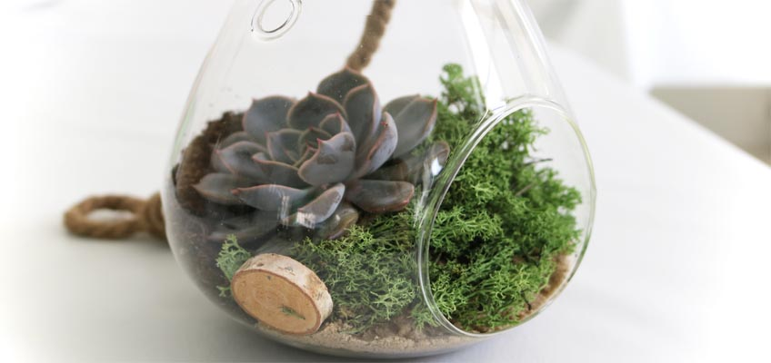 Beliebt Pflegeleichte Zimmerpflanzen | Sukkulenten im Glas - grüneliebe BM64
