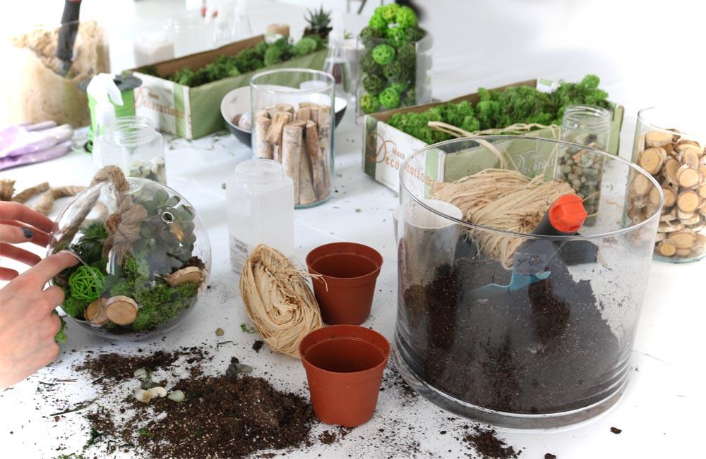 Sukkulenten im Glas DIY selber machen