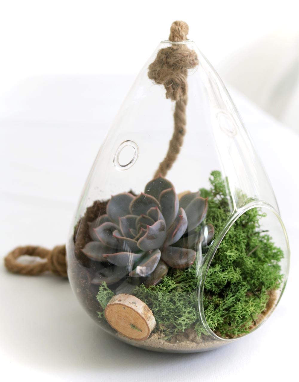 Sukkulenten im Glas Glasdeko Zimmerpflanze