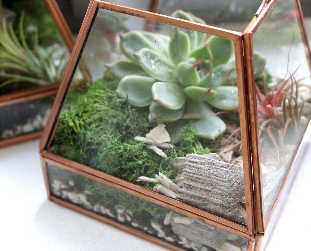Sukkulenten im Glas Zimmerpflanze Deko