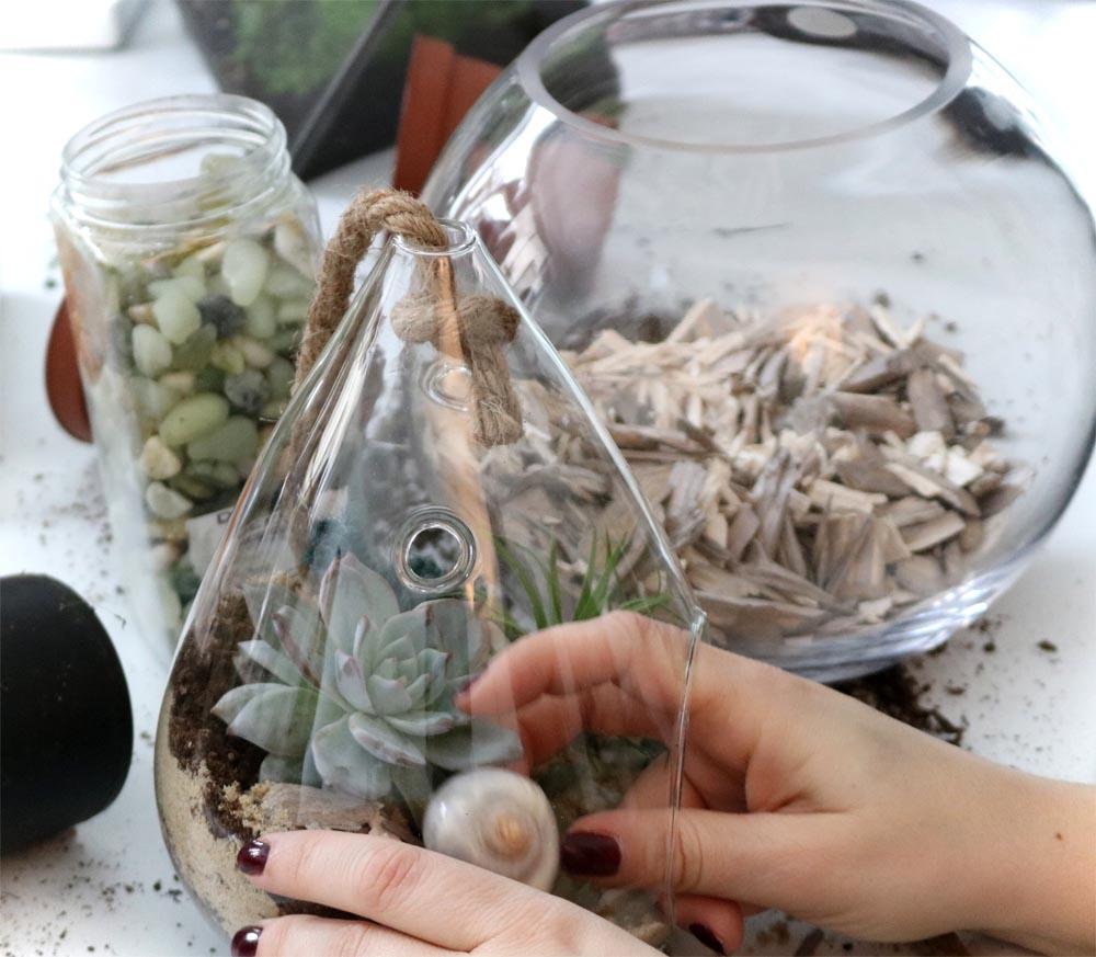 Sukkulenten im Glas basteln - Pflegeleichte Zimmerpflanzen