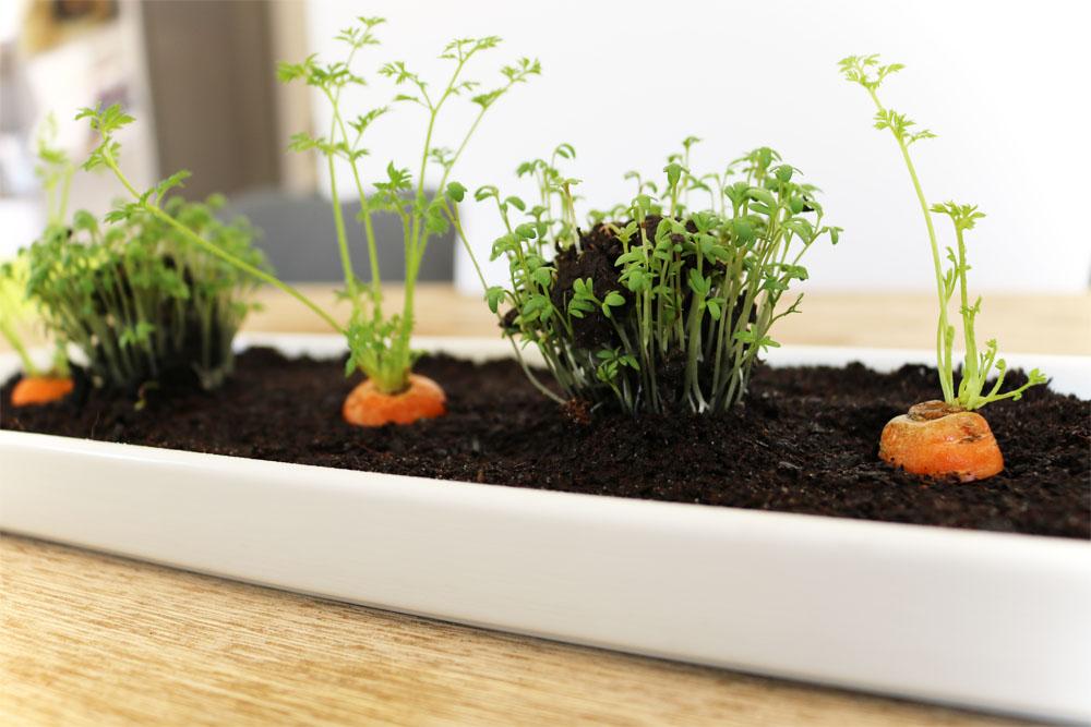 Tischdeko mit Gemüse Mini-Gemüsebeet