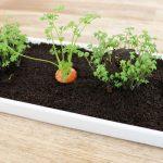 Tischedko Mini-Gemüsebeet nachwachsende Möhren DIY