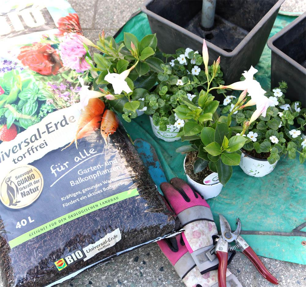 Natürlicher Dünger - Compo Kübelpflanzendünger mit Schafwolle