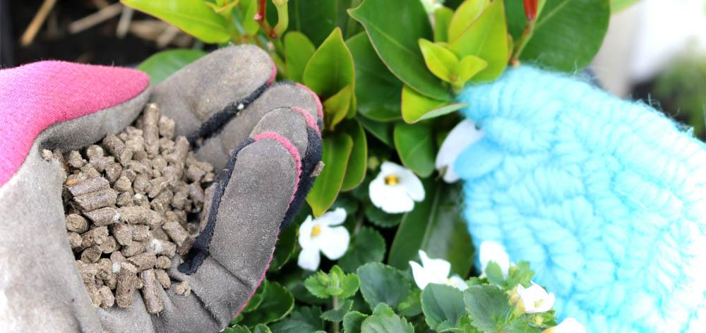 Balkonpflanzen Düngen - COMPO Bio Kübel- und Balkonpflanzendünger mit Schafwolle