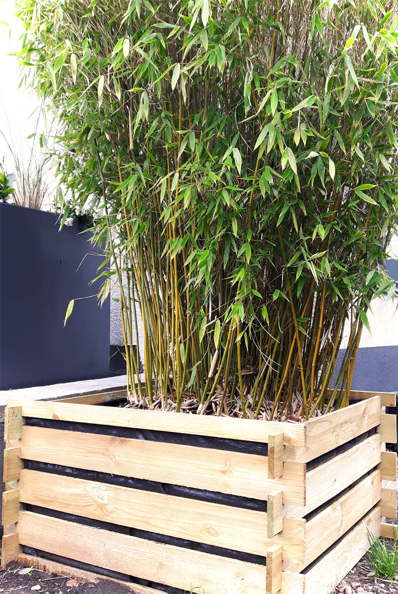 Bambus im Pflanzkübel