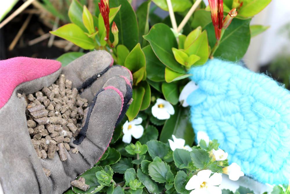 Dünge-Projekt - COMPO Bio Kübel- und Balkonpflanzendünger mit Schafwolle