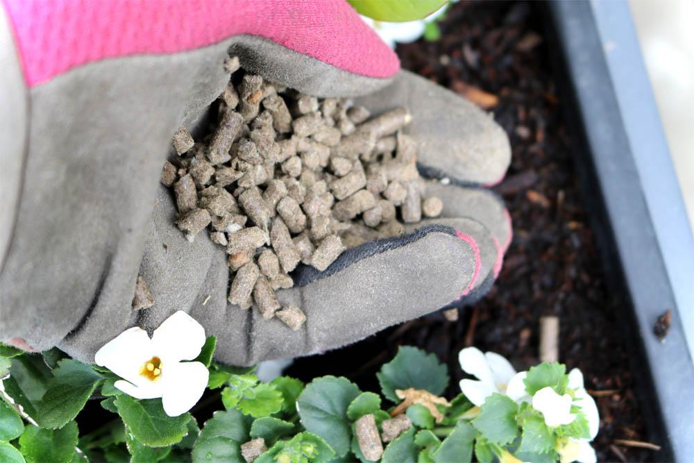 Düngepellets - COMPO Bio Kübel- und Balkonpflanzendünger mit Schafwolle