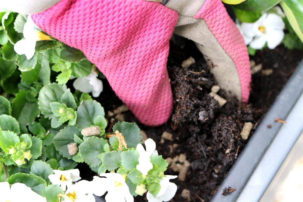 Dünger einarbeiten - Balkonpflanzendünger COMPO Bio mit Schafwolle