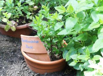 Offene Gartenpforte Naturnaher Garten Kräuterbeet
