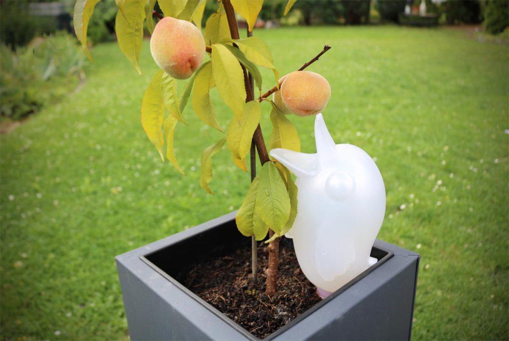 Bördy XL Bewässerung Kübelpflanzen