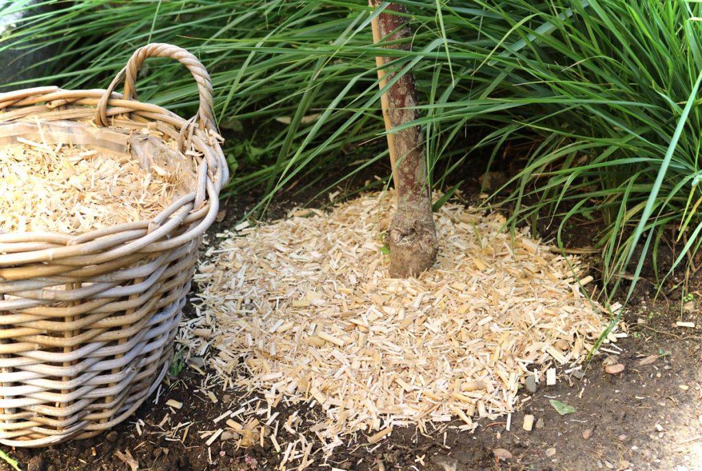 Baum mulchen mit Miscanthus Häcksel
