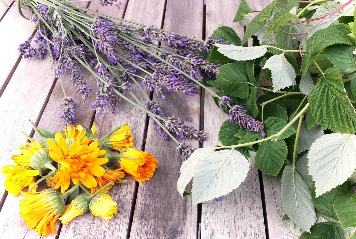 Blüten und Teekräuter trocknen