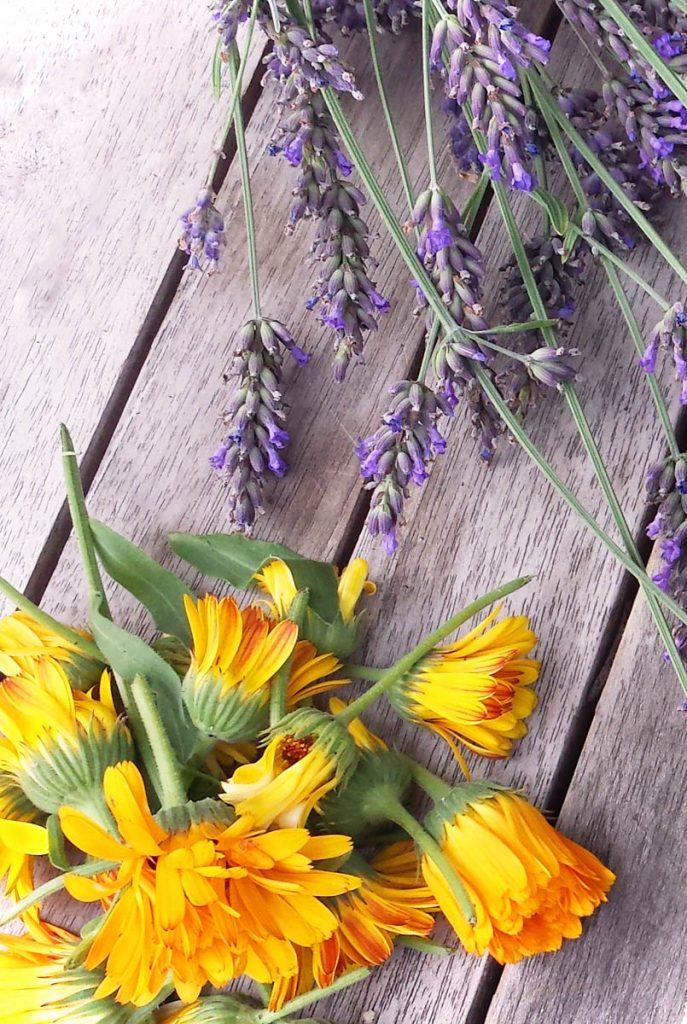 Lavendel und Ringelblumen trocknen