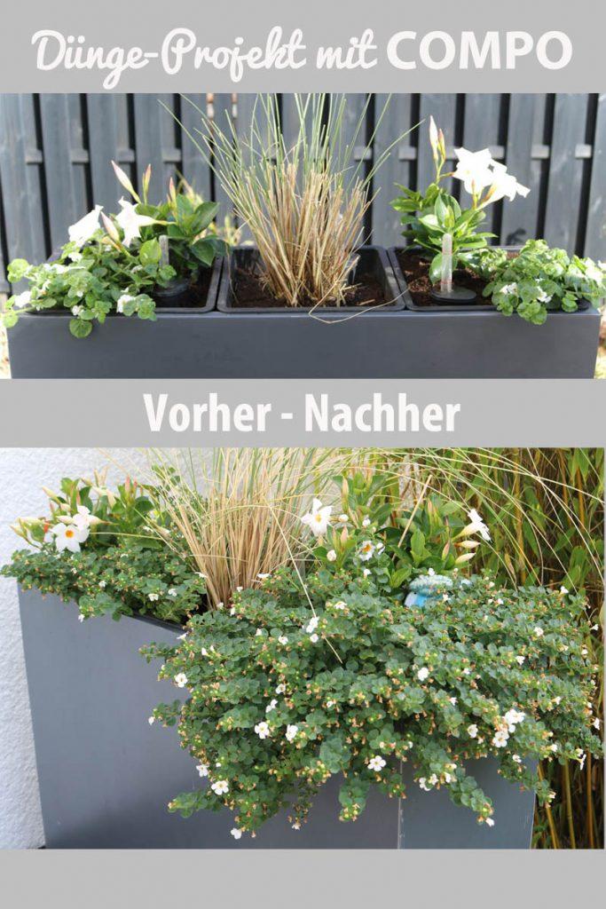 Pflanzenwachstum nach drei Monaten