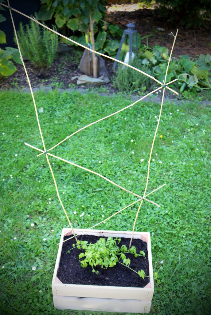 DIY Rankgitter aus Bambus