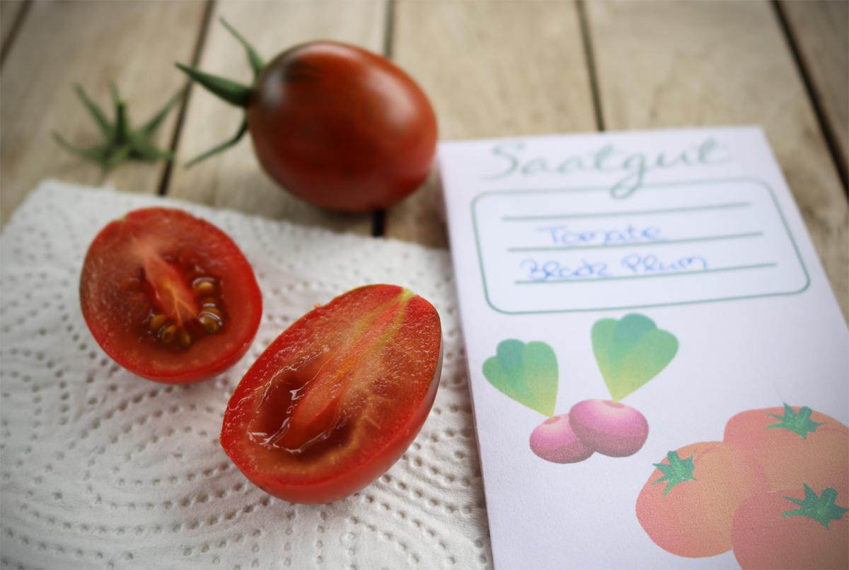 Tomatensamen ewinnen | Saatgut ernten