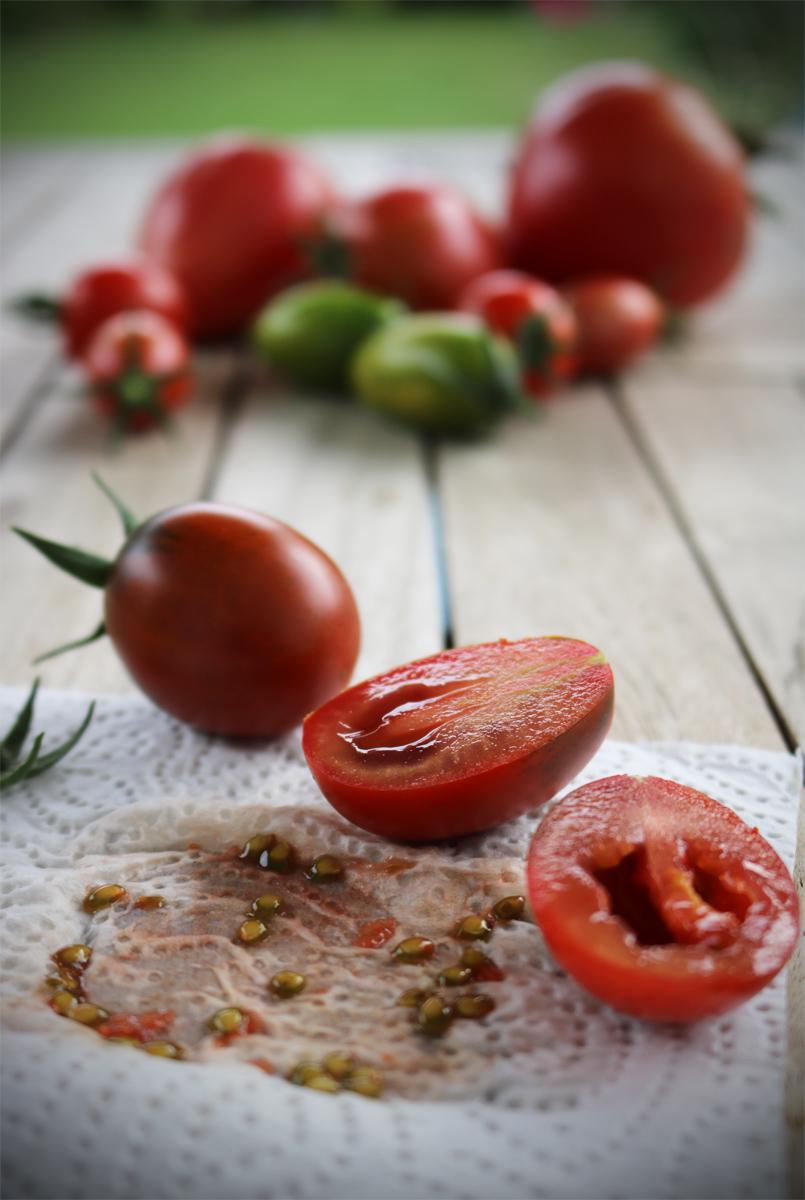 Tomatensamen gewinnen und aufbewahren