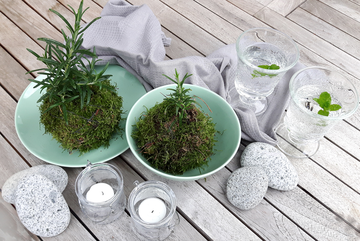 DIY Rosmarin Kokedama Style Tischdeko