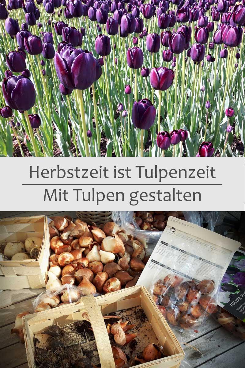 Herbstzeit ist Tulpenzeit - Mit Tulpen gestalten