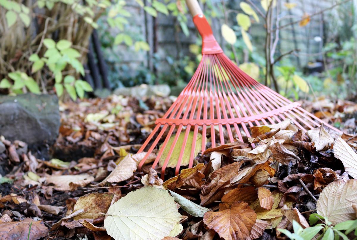 Gartenarbeit im November - Laub