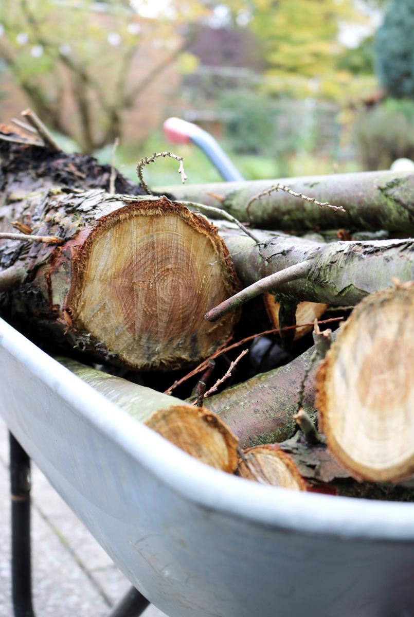 Gartenarbeit im November - Tipps