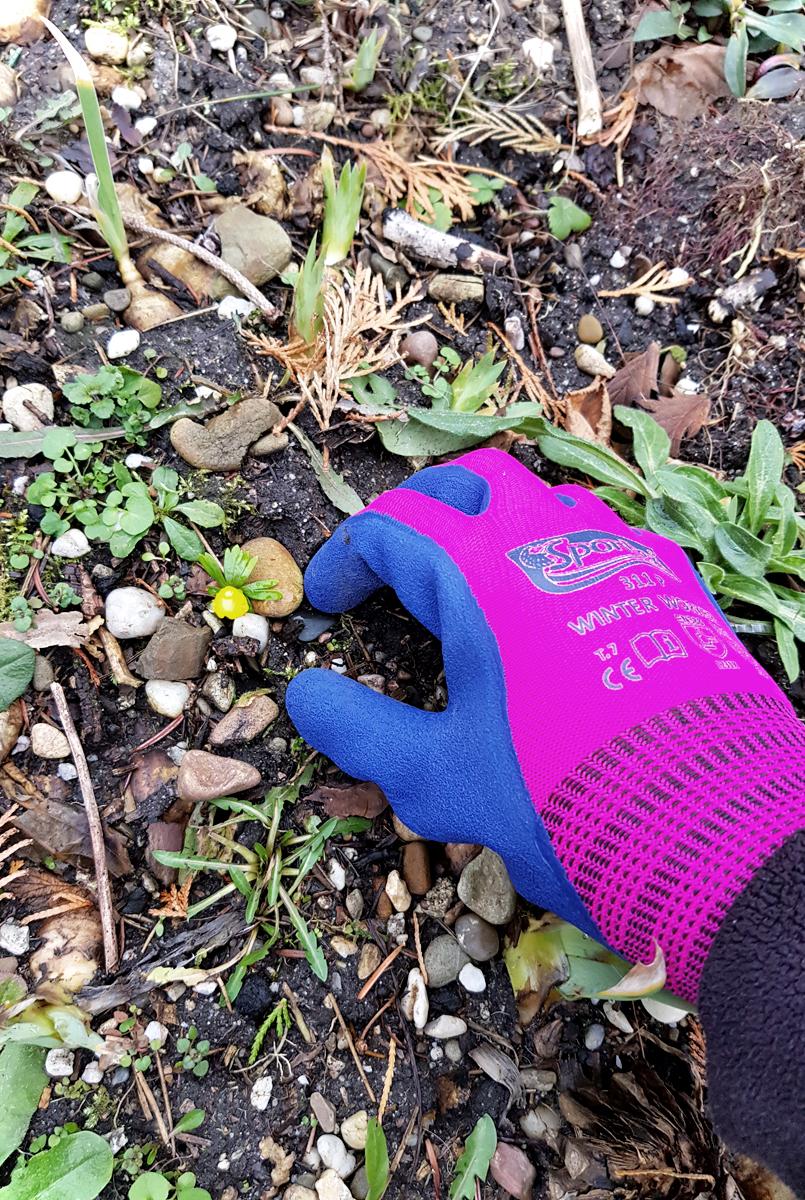 Winter Worker Spontex Gartenhandschuhe Gartenarbeit im Winter