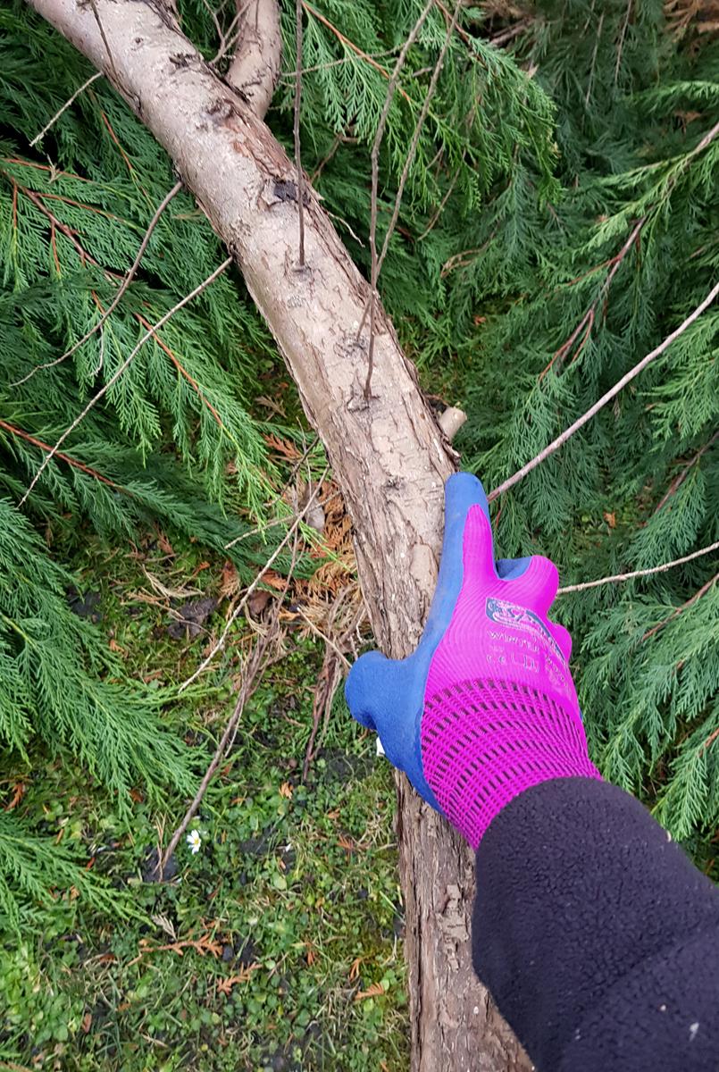 Winter Worker Spontex Gartenhandschuhe Winter