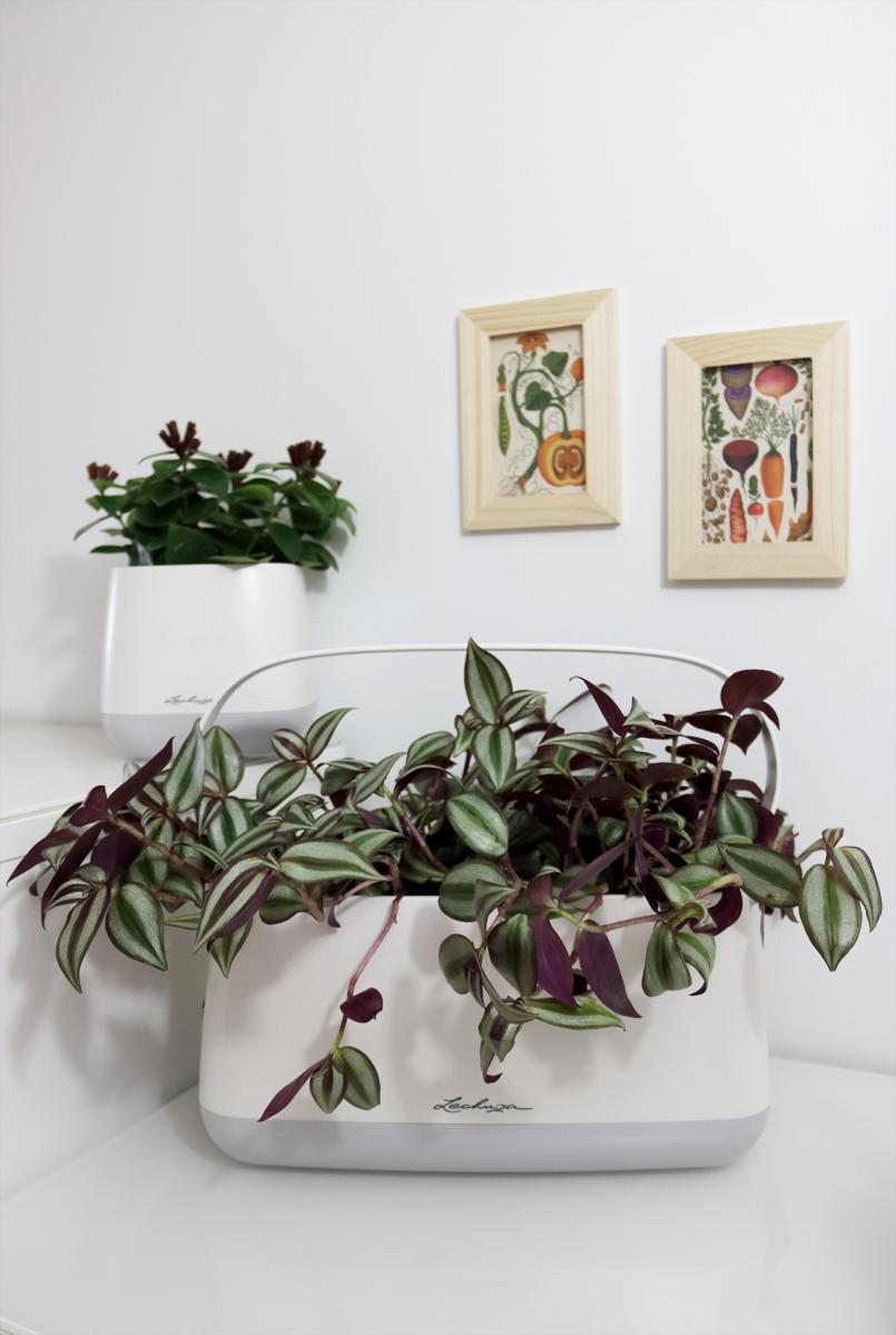 YULA Pflanzgefäß und Pflanztasche Lechuza Indoor Gardening