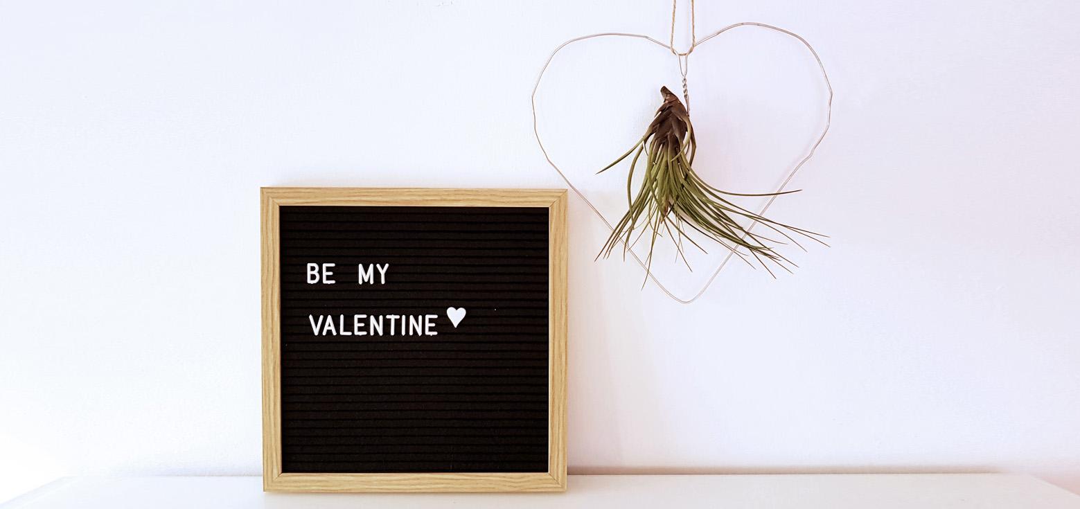 Drahtherz Tillandsia DIY Valentinstag | Von Luft und Liebe